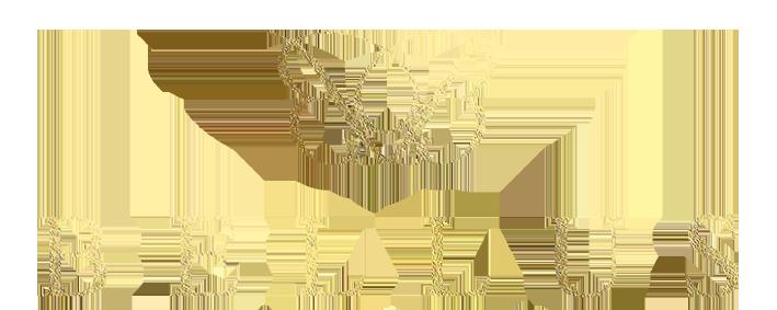 BELLUS EVENTS
